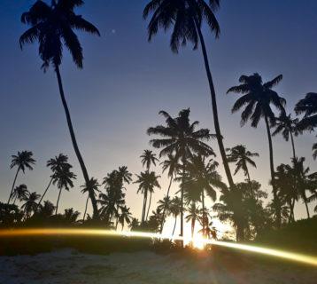 Zanzibar plaża palmy