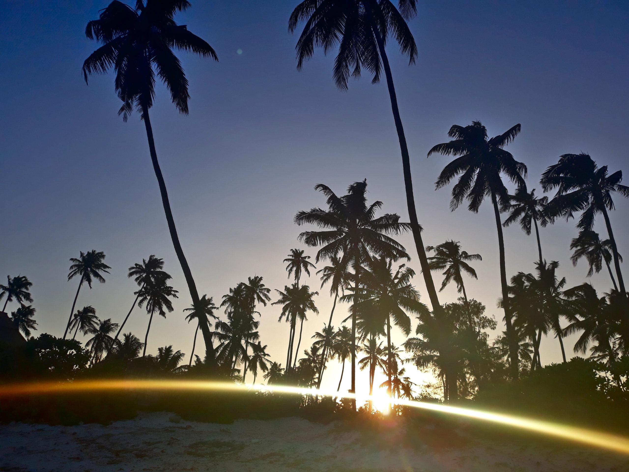 zanzibar-plaża-palmy