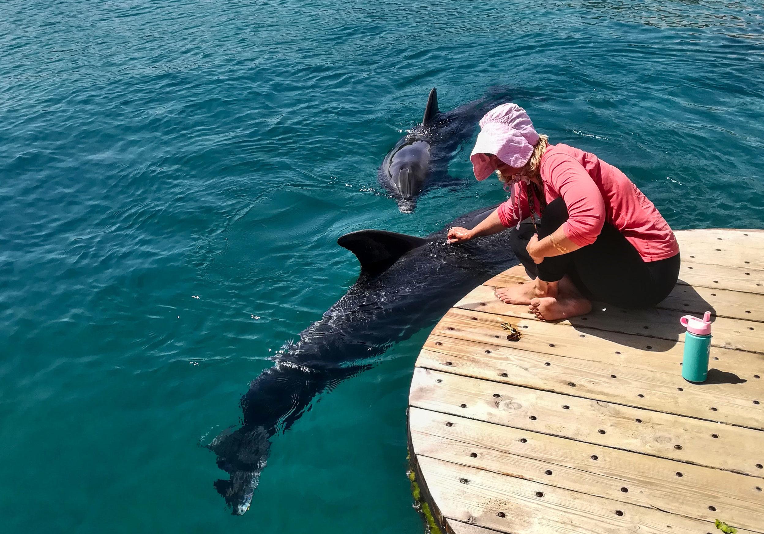 izrael-dolphin-reef