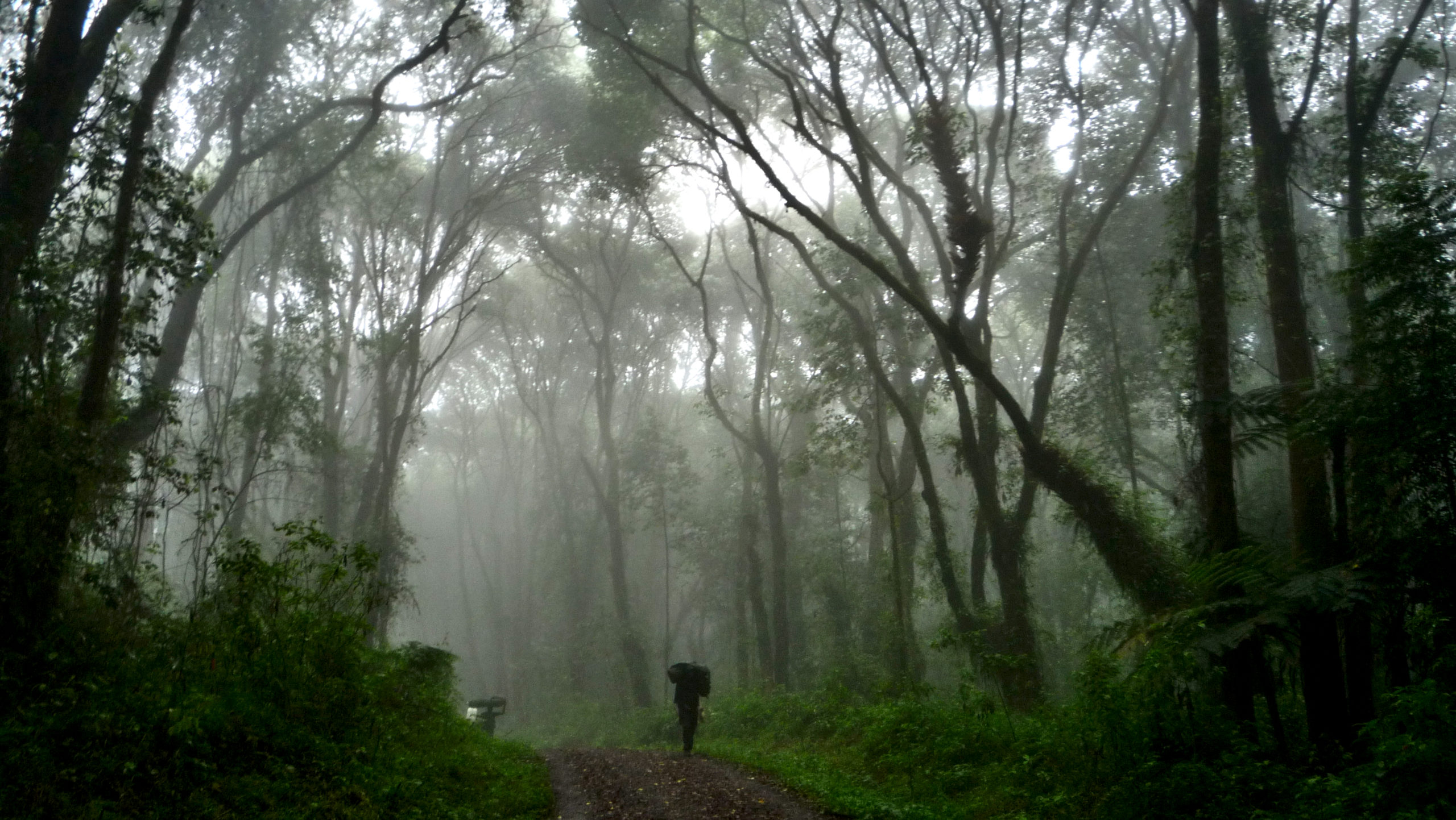 machame-route-forest