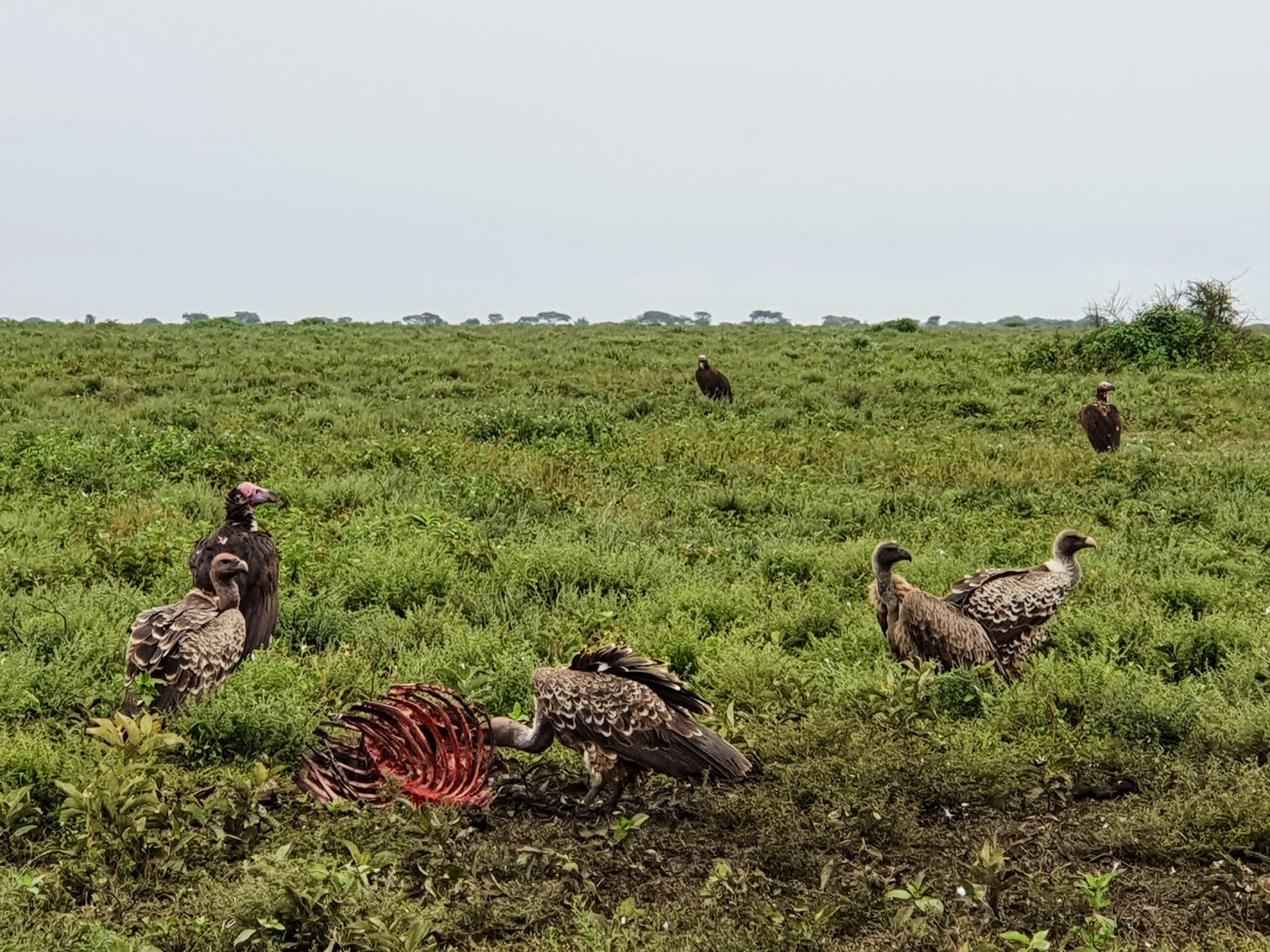 sepy-padlina-ptaki